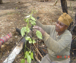 a study on forestry operations and management in cameroon What are forestry best management practices (bmp) from the suny college of environmental science and forestry soil and forests did you know that it takes, on.